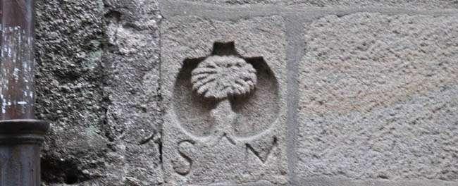 emblema-pino
