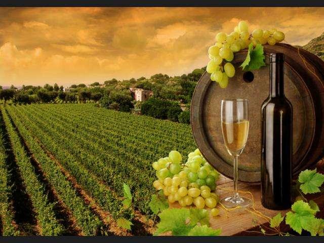 Descubre las Rutas del Vino en España
